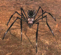 My spider in Lord of the Rings Online